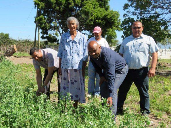 Rdh Naik en Rdl Willemse  besigtig die oes van ant Lena Felix (84). Agter staan Andy Botha en Desmond Carolus. Ant Lena staan steeds sedert kindsbeen elke oggend dou voor dag op om self in haar tuin te skoffel