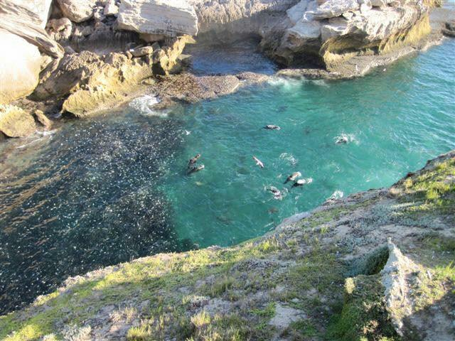 Robberg-Nature-Reserve-Plett-Tourism-Steph-le-Roux.5