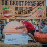 519,5kg pumpkin smashes SA record at Heidelberg's Giant Pumpkin Festival