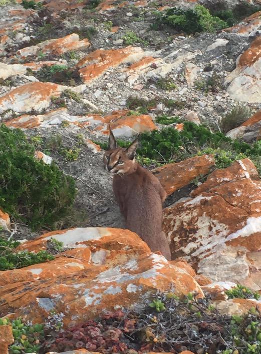 Robberg-Nature-Reserve-Plett-Tourism-Steph-le-Roux.9